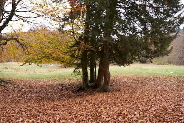 Jesienny park krajobrazowy las opadłe liście wysokie drzewa świeże powietrze