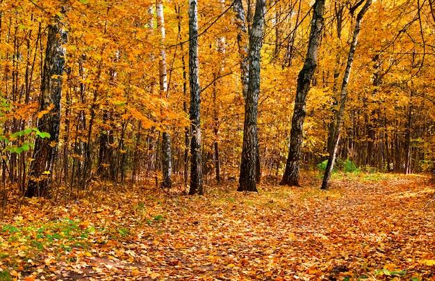 Jesienny park leśny