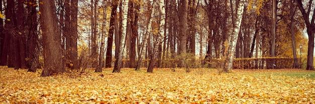 Jesienny park miejski lub las, jesienne drzewa i opadłe żółto-pomarańczowe liście na ziemi. transparent
