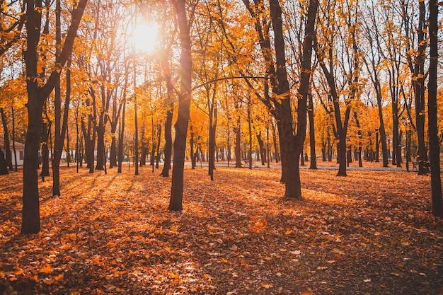Jesienny park miejski z asfaltową ścieżką wśród drzew, przez którą prześwieca słońce.