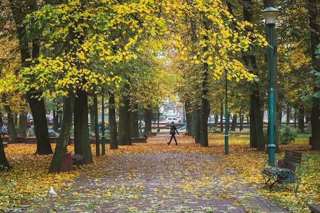 Jesienny park miejski. żółte liście na alei parku. ludzie chodzą po parku