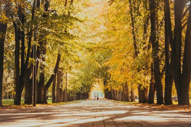 Jesienny park miejski