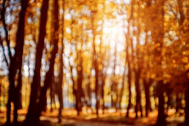 Jesienny park. rozmazane tło. jasny kolorowy bokeh.