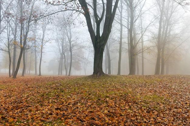 Jesienny park z drzewami i liśćmi leżącymi na ziemi, w ciągu dnia mglista pogoda
