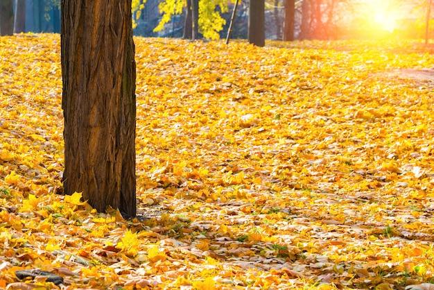 Jesienny park z drzewami i pomarańczowymi opadłymi liśćmi