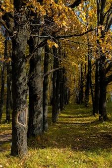 Jesienny park z żółtymi liśćmi