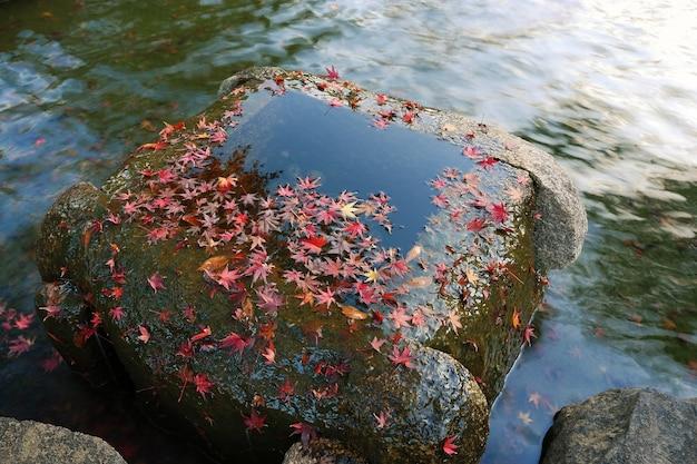 Jesienny park zen