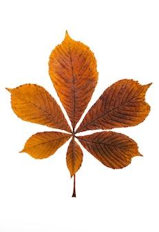 Jesienny pomarańczowy liść na białym tle