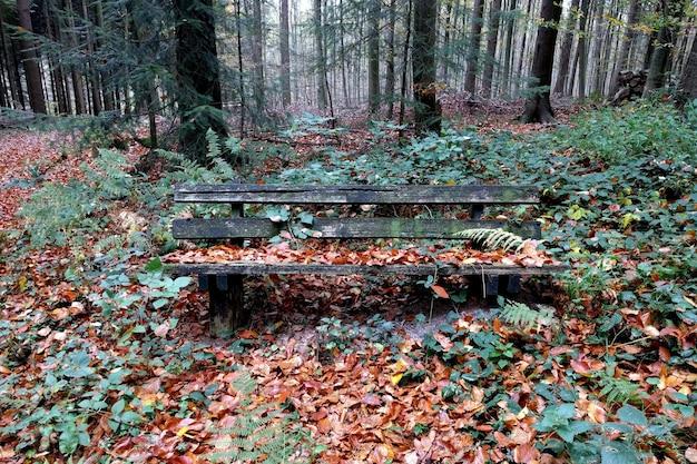 Jesienny sezon drzew i widok z przodu drewnianej ławki do wypoczynku na łonie natury w piękną jesień.
