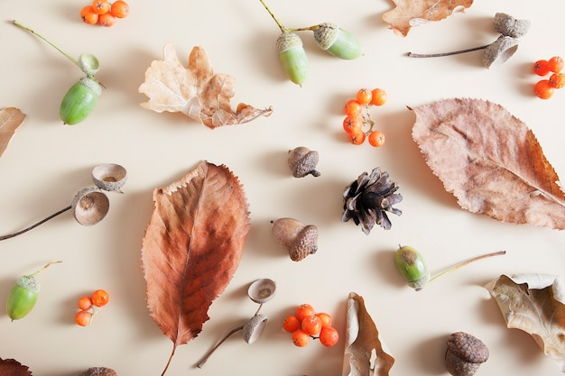 Jesienny układ jarzębiny, żołędzi, opadłych liści, szyszek.