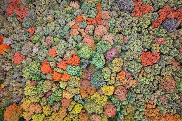 Jesienny widok z góry na las, tekstura. wielobarwne liście drzew.