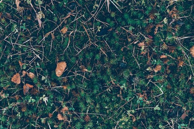 Jesienny wzór liści i trawy, klasyczny monochromatyczny nastrojowy ciemny kwiatowy wzór
