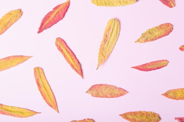 Jesienny wzór wykonany z liści w różnych kolorach. różowe tło