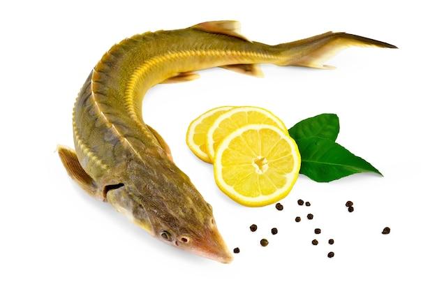 Jesiotr ryb z cytryną, pieprzem i cytryną pozostawia dwa na białym tle