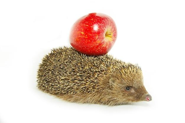 Jeż i jabłko na białym tle