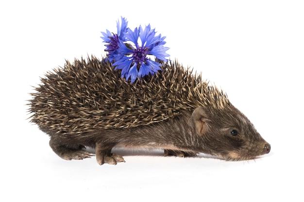 Jeż z kwiatem