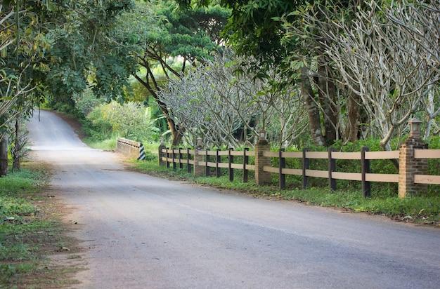 Jezdnia naturalna z drzewem przy wsią. w tajlandii