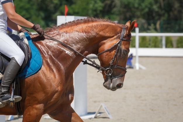 Jeździec jedzie na kasztanowym koniu na hipodromie z bliska