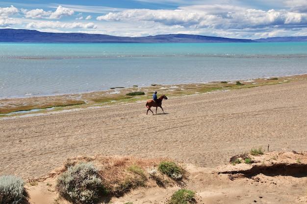 Jeździec, leśniczy w laguna nimez reserva w el calafate, patagonia, argentyna