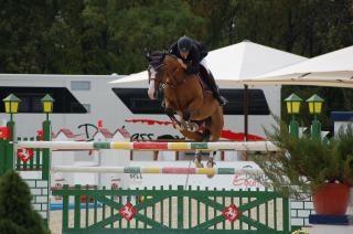 Jeździectwo, show