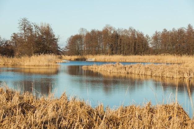 Jezioro do wędkowania z błękitną wodą i trzcinami jesienią.
