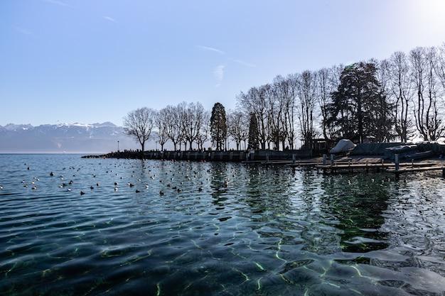 Jezioro genewskie i odbicia drzew widziane z lozanny w szwajcarii