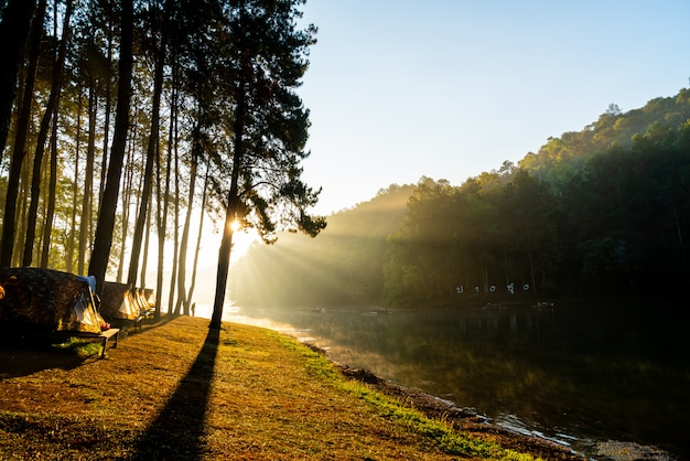 Jezioro i las o wschodzie słońca