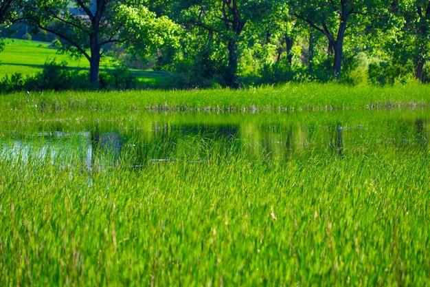 Jezioro i zielona łąka w pobliżu wody w słoneczny dzień.