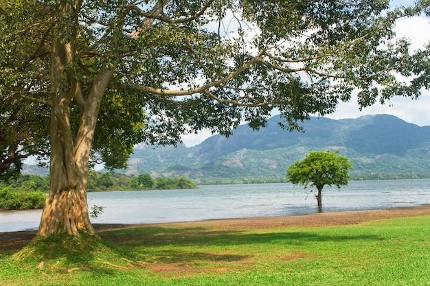 Jezioro kandalama