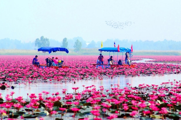 Jezioro lotosu