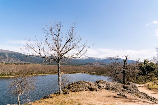 Jezioro otoczone krzewami i bezlistnymi drzewami