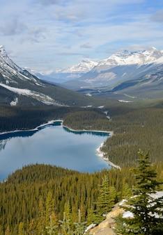 Jezioro peyto w parku narodowym banff, alberta, kanada. turkusowa woda i kształt jeziora w kształcie głowy wilka