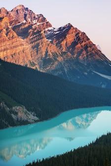 Jezioro Peyto W Parku Narodowym Banff, Kanada Premium Zdjęcia