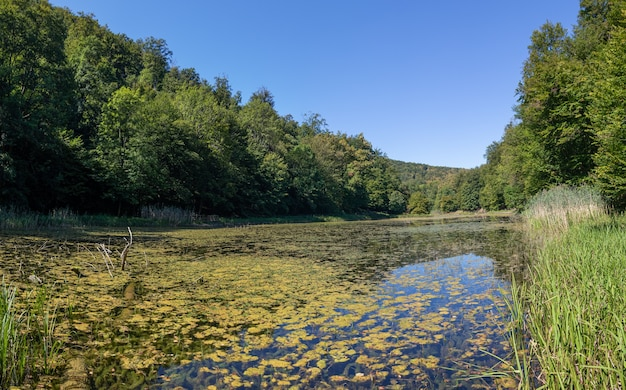 Jezioro porośnięte mchem otoczone pięknymi gęstymi zielonymi drzewami