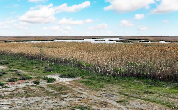 Jezioro porośnięte trzciną w rezerwacie przyrody