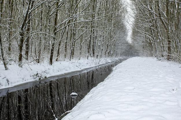 Jezioro pośrodku zaśnieżonych pól z drzewami pokrytymi śniegiem