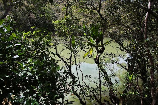 Jezioro w dolinie wamena, papua, indonezja