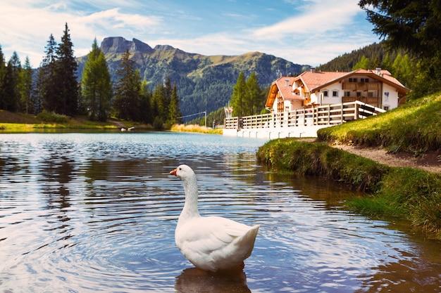 Jezioro w górach dolomitów i gęsi na pierwszym planie. włoskie dolomiti. włochy