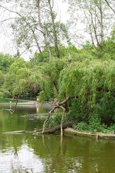 Jezioro w parku volkspark friedrichshain w berlinie, na brzegu stoi czapla, a w jeziorze pływają kaczki