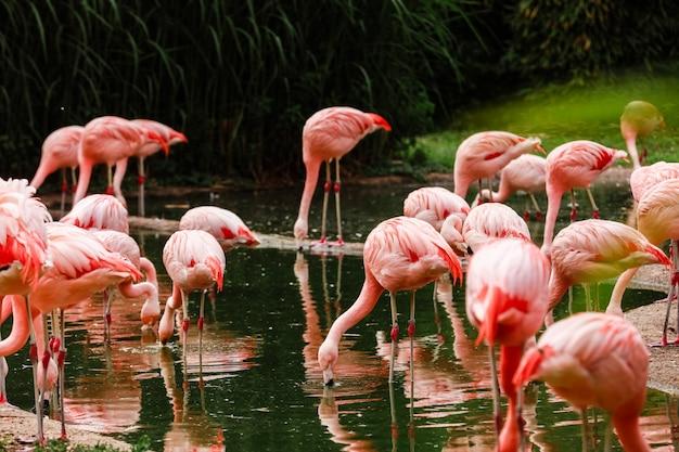 Jezioro z pięknymi różowymi flamingami otoczonymi bujnymi roślinami w słoneczny dzień