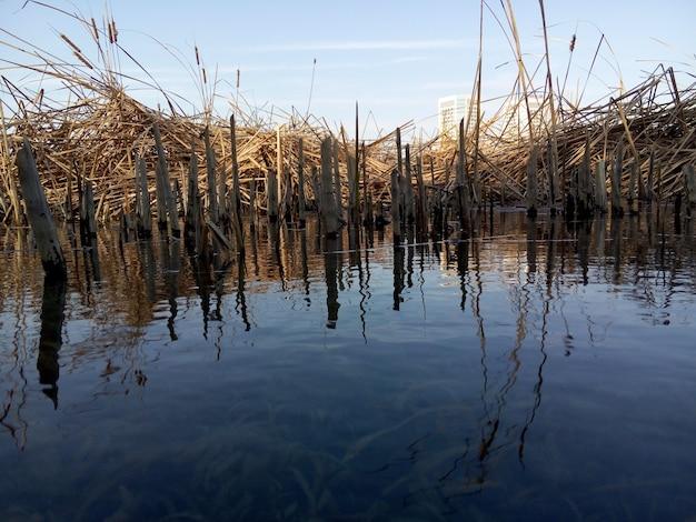 Jezioro z roślin i gałęzi