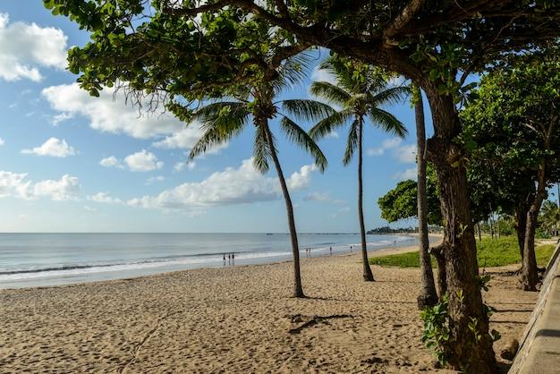 Joao pessoa, paraiba, brazylia 25 maja 2021 r. plaża manaira z palmami kokosowymi.