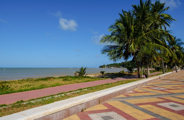 Joao pessoa paraiba brazylia gaj kokosowy na plaży cabo branco