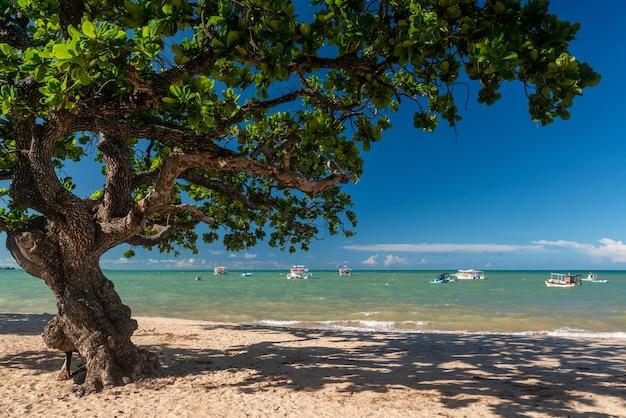 Joao pessoa paraiba brazylia tambau drzewo na plaży i łodzie