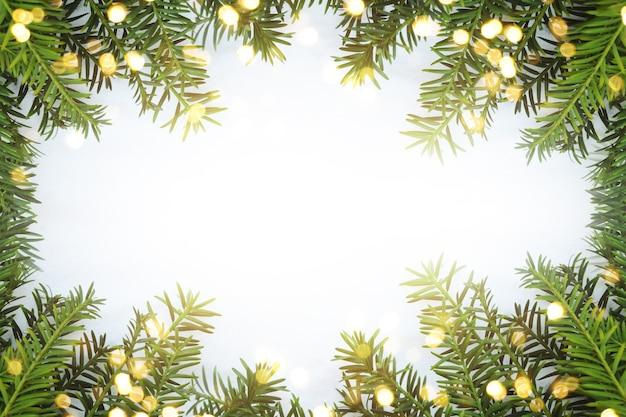 Jodła bożonarodzeniowa