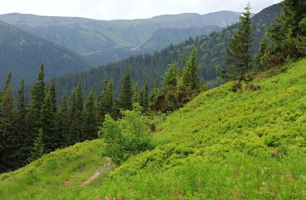 Jodłowy Las I Wiejska Droga Z Kałużą Na Letnim Zboczu Góry (ukraina, Karpaty) Premium Zdjęcia