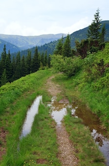 Jodłowy las i wiejska droga z kałużą na letnim zboczu góry (ukraina, karpaty)
