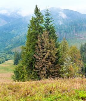 Jodły na tle góry jesień. dwa ujęcia ściegu obrazu.