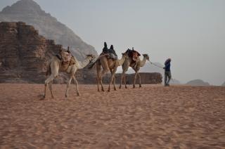 Jordanii wielbłądy