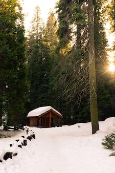 Kabina po środku sequoia national park, kalifornia